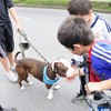Los perros deberán usar bozal en la recreovía