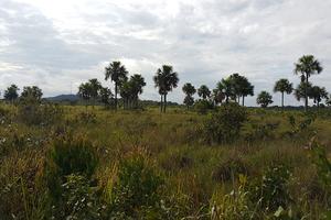 Este viernes presentan estudio de suelos de Casanare