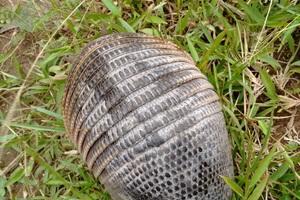 14especies silvestres fueron devueltas a su hábitat en el municipio de San Martín de los Llanos