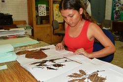 Único herbario en la orinoquia está en la Universidad de los Llanos