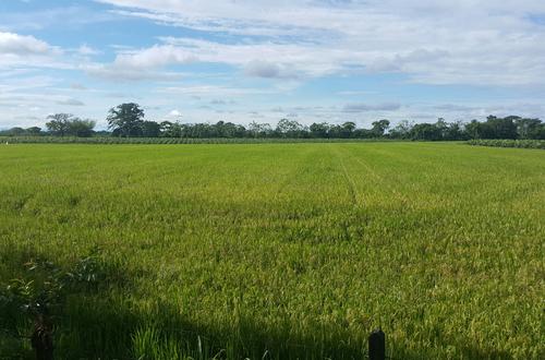 Llanos Orientales cuentan con potencial para cultivos promisorios: ANDI