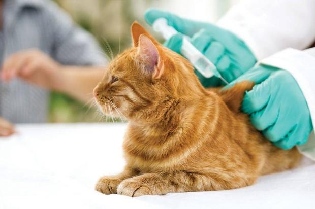 ¡Atención! Se aplicarán 45 mil vacunas felinas y caninas en Villavicencio