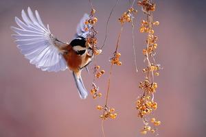 En el Ariari se capacitan en avistamiento de aves