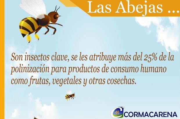 En crecimiento la apicultura en el Meta