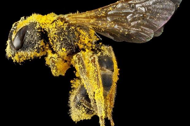 ¡Si desaparecen las abejas, desaparece la humanidad!