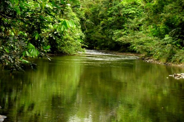 Colombia y Perú se unidos para prevenir el tráfico de flora y fauna