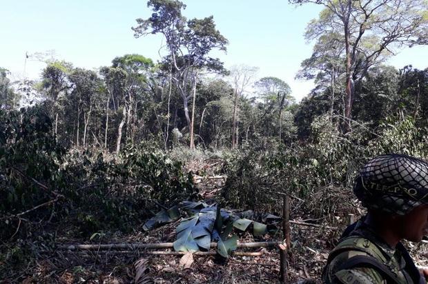 Se imputa a cinco personas por deforestación en zona de reserva indígena