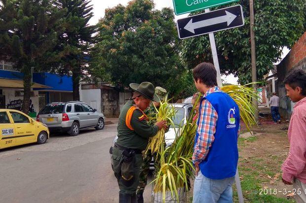 624 hojas de palma fueron incautadas el Domingo de Ramos