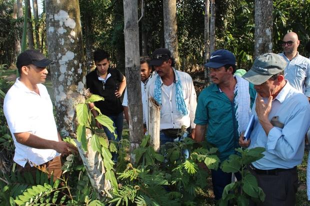 Avanza proyecto de reforestación en San Juan de Arama