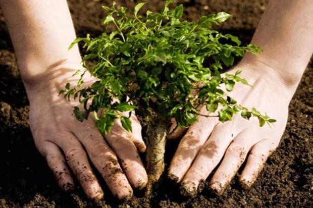 9.000 árboles han sido plantados en Villavicencio
