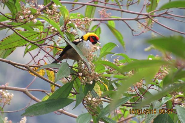 Tres Parques Nacionales registran una gran cantidad de especies de aves