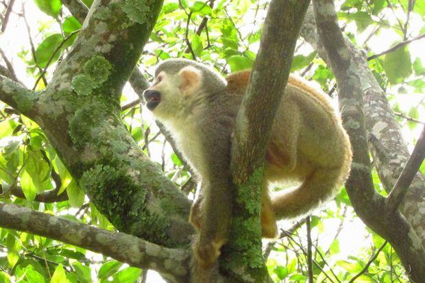 16 animales silvestresfueron reubicadosenfinca de Cubarral