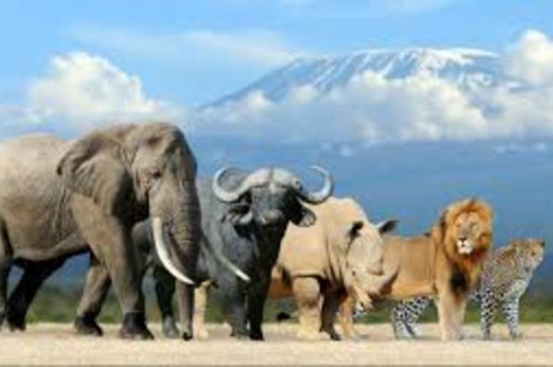 El humano ha extinguido 83% de los mamíferos y la mitad de las plantas