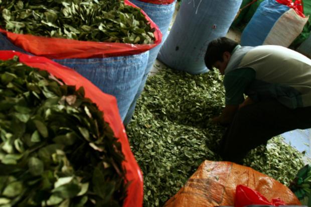 La producción de Cocaína en Colombia va en aumento