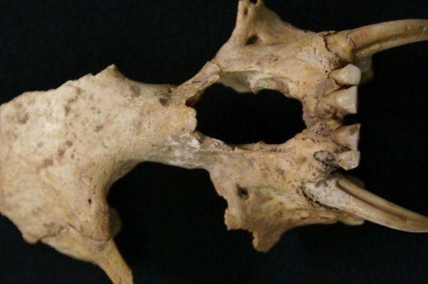 Restos de primate desconocido en tumba china de 2 mil años