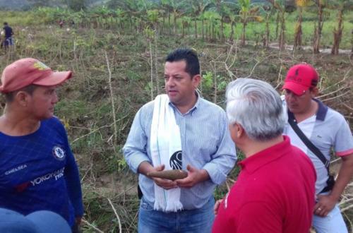 Productores de yuca podrán recibir apoyo para comercializar