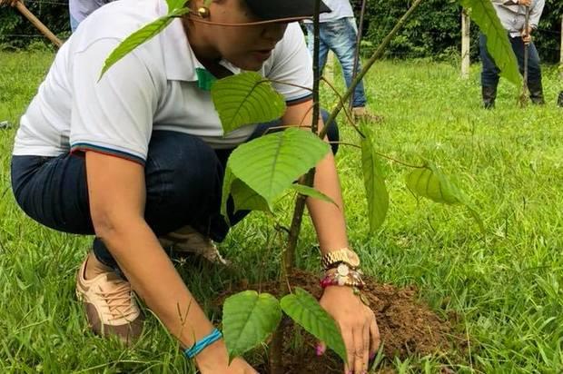 Miles de Palmas de moriche se plantarán en Puerto Gaitán