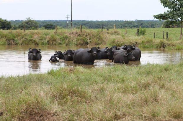 Aguas de producción tratadas de Ecopetrol aptas para actividades agrícolas