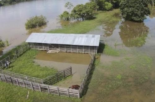 Ganadería de Guainía y Vichada afectada por inundaciones