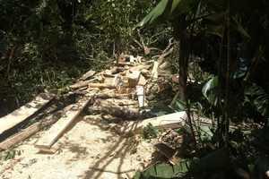 3 personas capturadas por aprovechamiento ilícito de los recursos naturales