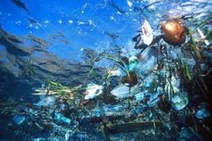 Microfibras de plástico en peces encontrados por Biólogos en el Pacífico