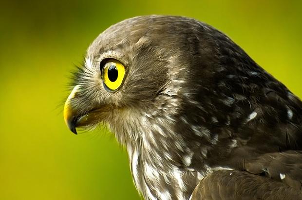 Un estudio revela que las aves ven los campos magnéticos de la Tierra