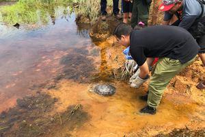 30 animales silvestres regresaron a su hábitat natural en Puerto López