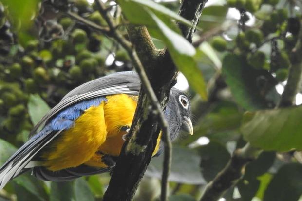 Cormacarena se sumó a la iniciativa 'October Big Day' para cuidar las aves
