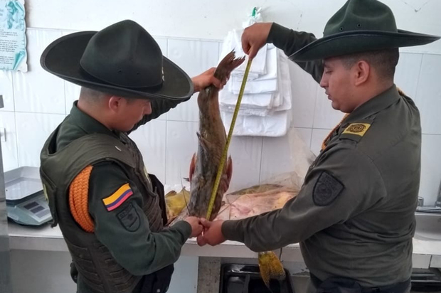 Policía incautó dos toneladas de carne y pescado por salubridad en Granada