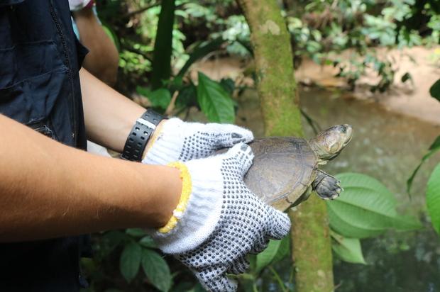 Se liberaron especies silvestres en el Parque Natural Yurimena Cofrem