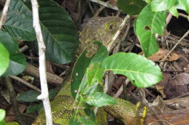 39 especies retornaron nuevamente a su hábitat en el Meta