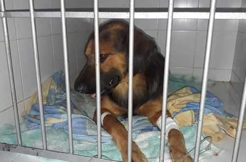 Judicializado joven por maltrato animal