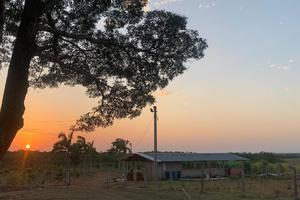 Cómo van a restaurar más de 31 mil hectáreas