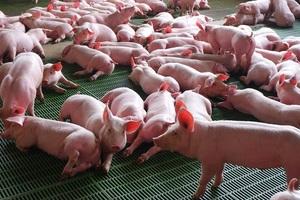 Agricultores y porcicultores no necesitan permiso especial para transitar