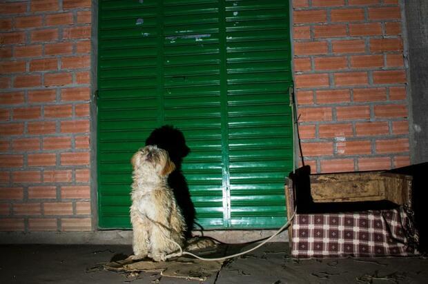 Departamentos con mas denuncias por maltrato animal