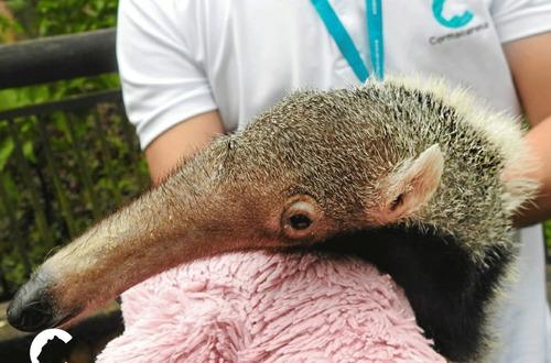 Animales rescatados en Meta, trasladados a zoológico de Cali
