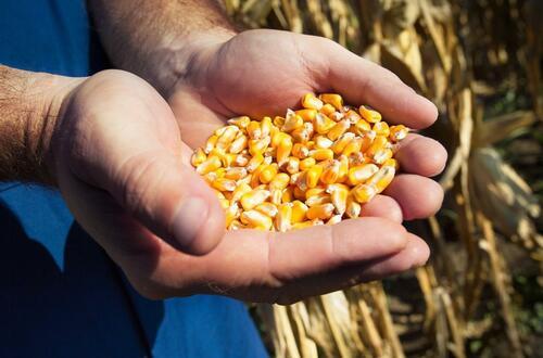 Nuevas semillas para el campo colombiano