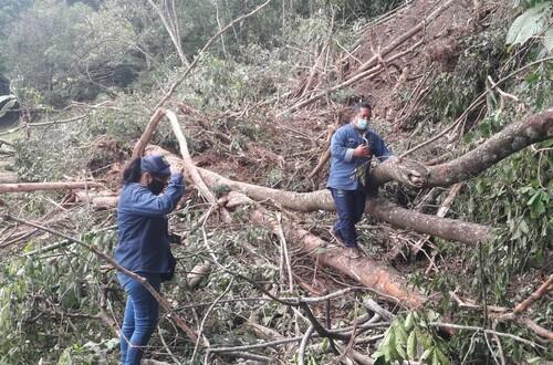 Temporada invernal  deja  47 árboles caídos en Villavicencio