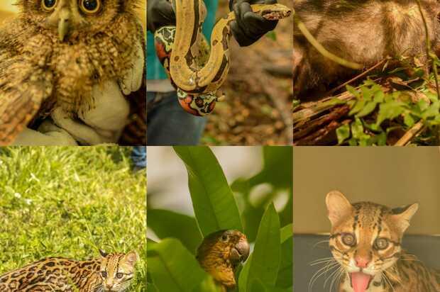 Animales rescatados  regresaron a vida silvestre