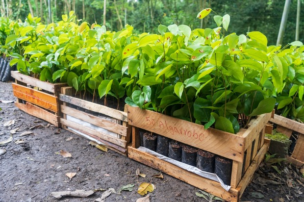 Ecopetrol sembró 339.000 árboles en el Meta