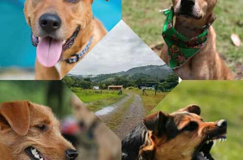 Villavicencio tendrá Centro de Bienestar Animal