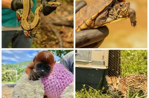 Autoridades rescatan 678 animales en Meta