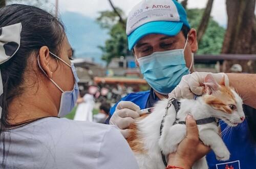 Fin de semana de vacunación antirrábica en Villavicencio