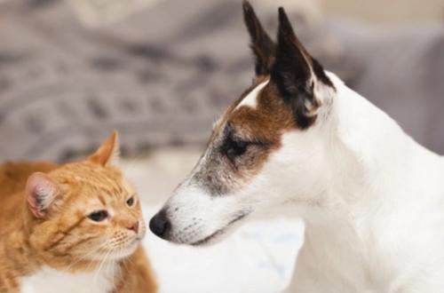 'Caninata' y jornada de atención a perros y gatos
