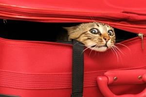 ¿Viajar con tu gato es un problema?